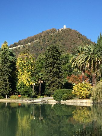 Парк с лебедями: Park With Swans