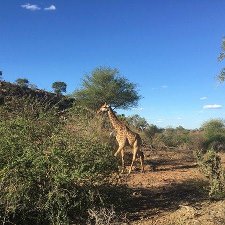 Zdjęcie Mapungubwe National Park