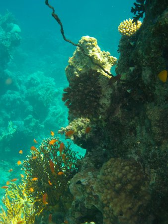 Siva Port Ghalib: Snorkeling (hôtel)