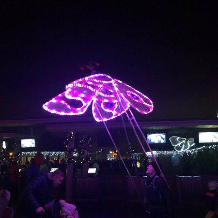 Amazing Lanterns!