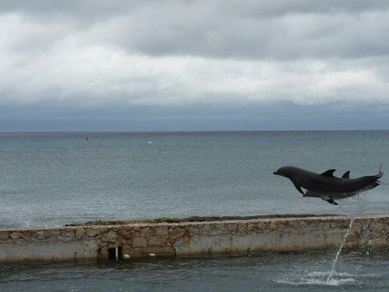 Costa Maya, المكسيك: Delfini in Volo a Costa Maya