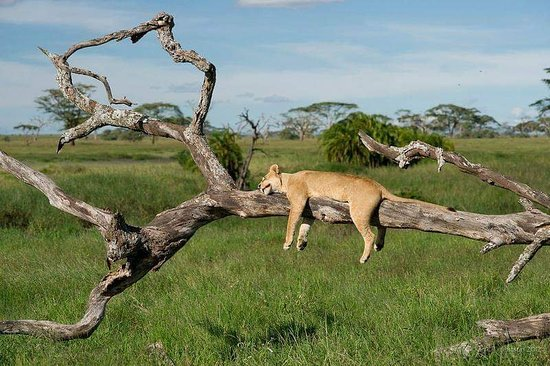 Superb Wildlife Game Drives In Serengeti National Park