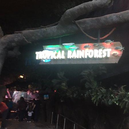 Ripley's Aquarium of the Smokies: Best Aquarium In America