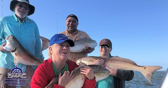 Four Big Apalachicola Bay bull redfish at one time Great job!!!