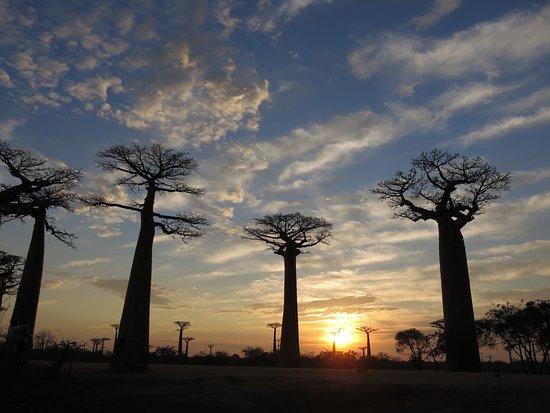 Lungo il Viale dei baobabs