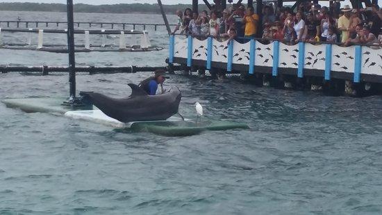 Islas de Rosario, Colombia: El espectáculo de los delfines, muy bueno!!
