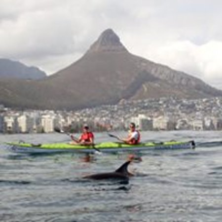 Cape Town, South Africa: a dolphin!!