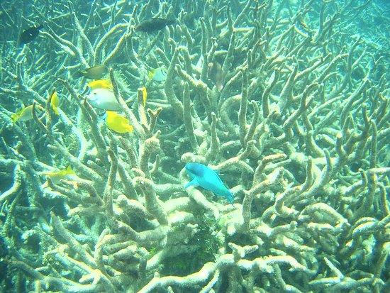 Foto de La Gran Barrera de Coral