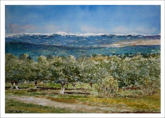 La Sierra de Guadarrama desde el monte de El Pardo en Madrid. He pintado esta acuarela hoy desde este bonito lugar rodeado de encinas y al que recomiendo venir a pasear y disfrutar de las vistas que del Guadarrama se pueden ver. Información y encargos: https://www.rubendeluis.com Tel. 616 46 21 58 ruben@rubendeluis.com #Madrid #arte #ElPardo #paisajes