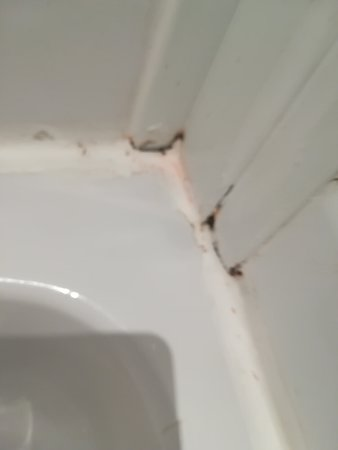 Mold and mildew festering in the shower pic1
