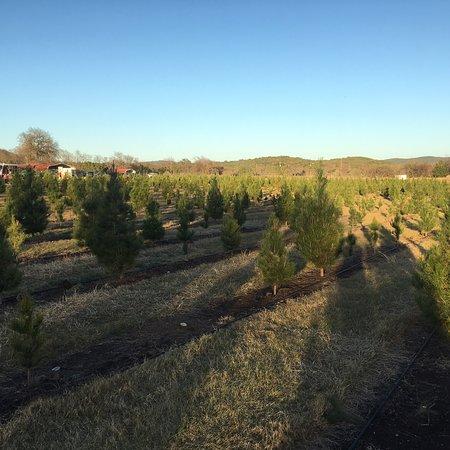 Pipe Creek Tree Farm & Pumpkin Patch