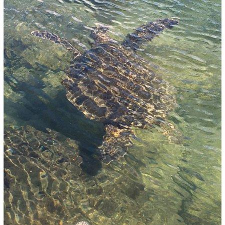 Black Sand And Sea Turtles