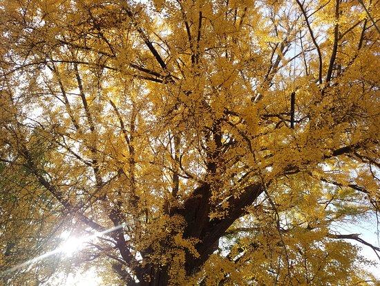 Nishida Sugiyama Shrine