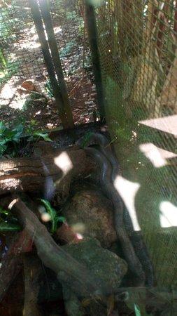 Zoo de Guyane: Les quelques animaux rencontrés en chemin.