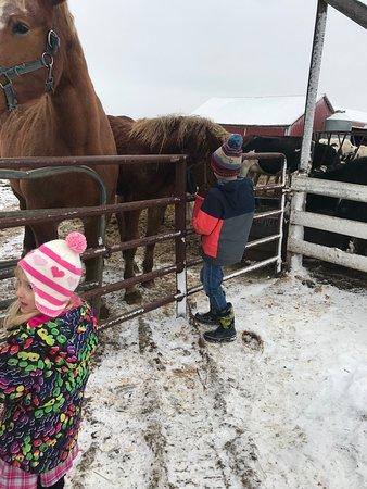 Buggy Lane Tours: Feeding the horses.