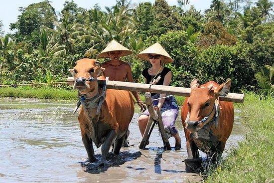 バリの日常生活ツアー:農業体験
