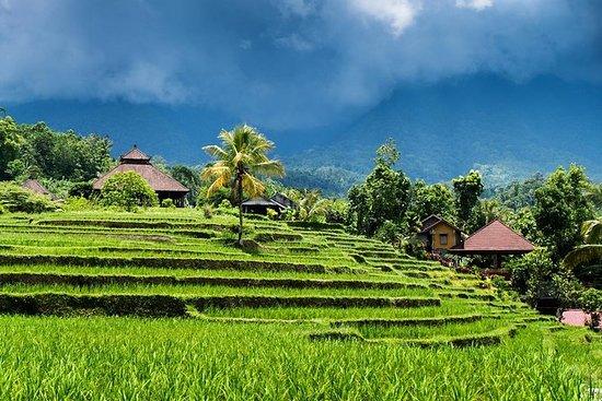 Circuit-randonnée dans la rizière Ubud