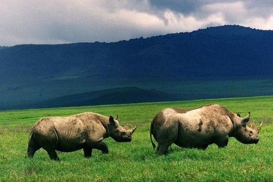 Full-Day Day Trip to Ngorongoro...