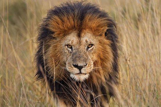 Excursion au Lion Park au départ de...