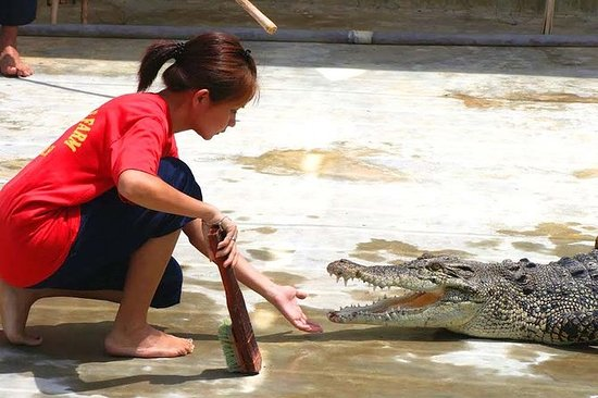 Visita alla fattoria dei coccodrilli