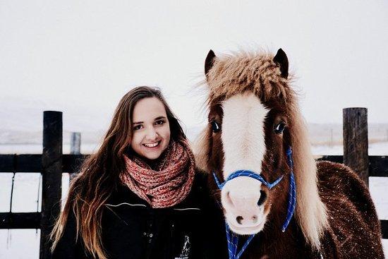 Fotograf og fôr islandske hester