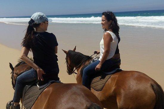 在海灘里斯本地區的馬騎術遊覽