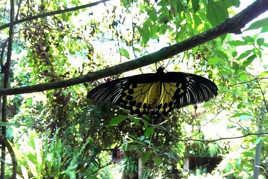 Entrada al parque de mariposas KL y...