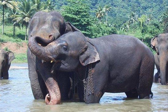 Privat dagstur till Kandy med ...