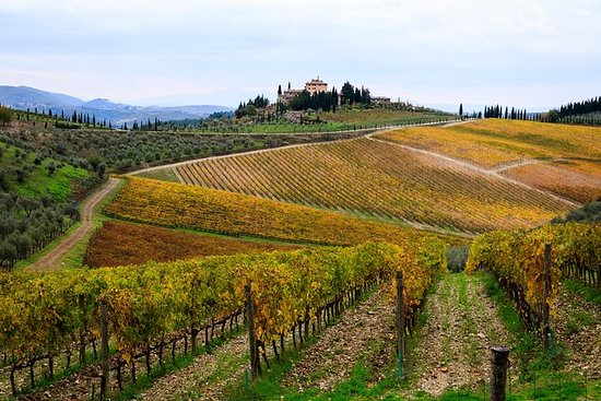 Private Orvieto and Tuscany Wine Tour...
