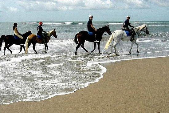Horse Riding and Ubud Experience