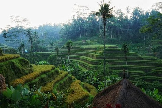 Bali (naturlig) Discovery Tour ris...
