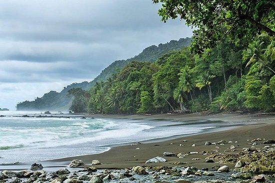 Parque Nacional Corcovado Tour de un...