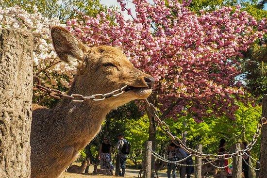 大阪:日帰り奈良観光