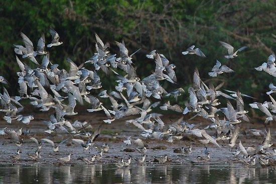 Bundala Vogelparadies - All Inclusive...