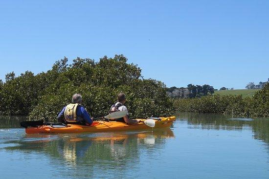 Excursion en kayak dans la réserve...