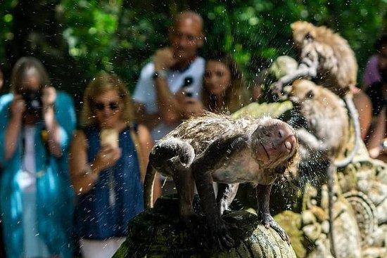 Highlights of Ubud: Monkey Forest...