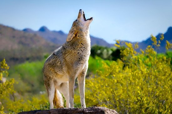 Allgemeiner Eintritt Arizona-Sonora...