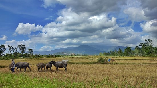 We are sure that not only foreign tourists but also our Cambodian people will be amazed by the landscape of countryside in Kampot province too. Do you think so? www.butterflytours.aisa  #butterflytours #bestbiketourinsiemreap #bestbiketourinbattambang #bestbiketourinkampot #sunriseatangkorwat #offthebeatentrack #studenttraveltrips #triporganizer #travelwithlocals #asiantour #experiencetrips #cambodiapackage #cambodiatravelpackages #touroperatorincambodia #siemreapcountrysidetour #onedaytour #sie