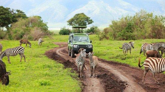 Foot On Kili Tanzania Adventures: Among Our Best Adventure and Safaris and Kilimanjaro Climb