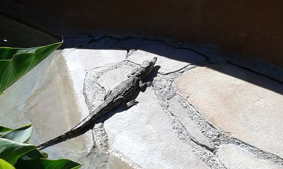 Crocodile Ranch: I piccoli