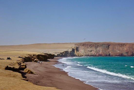 Aventura En Paracas: National reserve Paracas