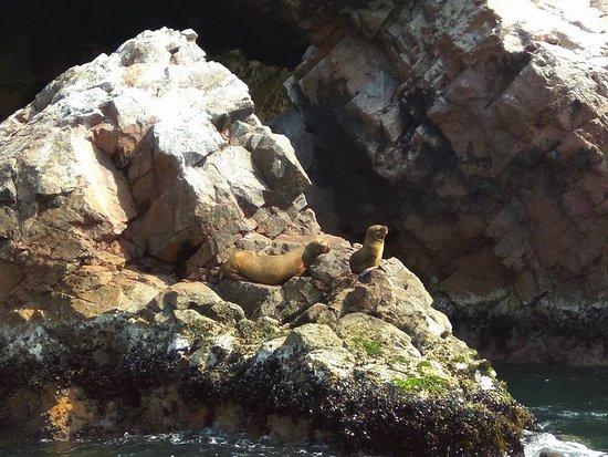 Aventura En Paracas: SeaLions in Ballestas Islands