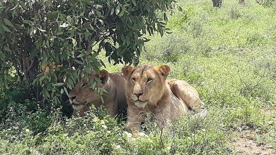 Jambo Life Safari