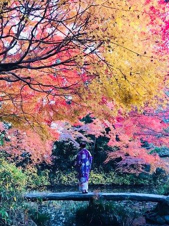 紅葉と着物