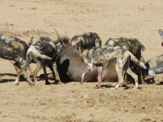 Erindi Game Reserve Photo