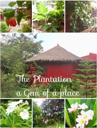 The Plantation Gambia Foto