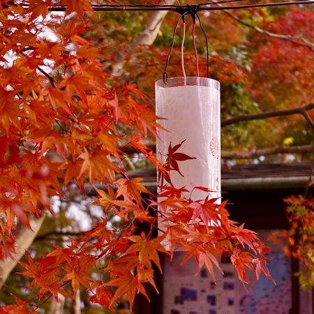紅葉の季節は最高