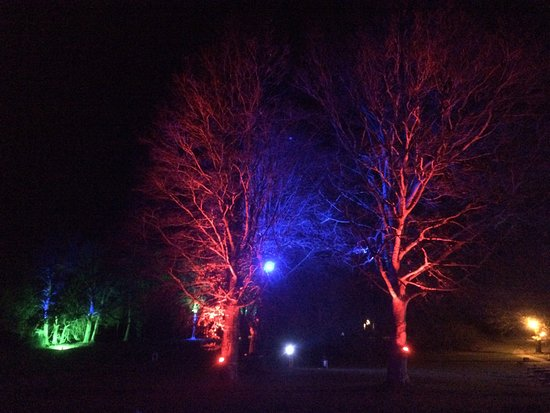 Stansted Park: Trees on fire