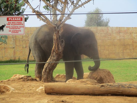 Pafos Zoo: Forlorn elephant