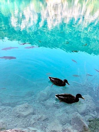 Plitvicei-tavak Nemzeti Park – fénykép